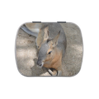 patagonian cavy animal resting animal jelly belly candy tins