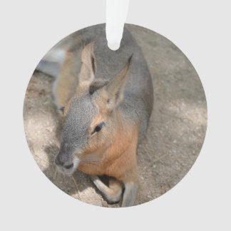 patagonian cavy animal resting animal ornament
