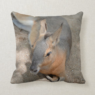 patagonian cavy animal resting animal pillow
