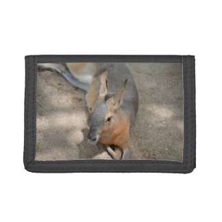 patagonian cavy animal resting animal trifold wallet