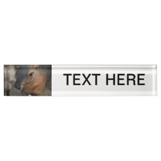patagonian cavy head view animals capybara name plate