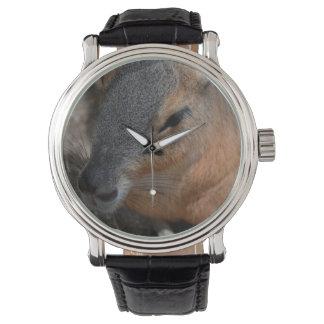 patagonian cavy head view animals capybara wrist watch