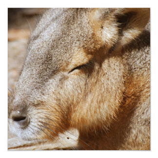 Patagonian Cavy 5.25x5.25 Square Paper Invitation Card