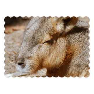 Patagonian Cavy 5x7 Paper Invitation Card