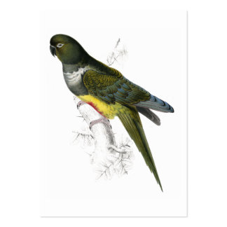 Patagonian Parrakeet-Maccaw by Edward Lear Large Business Card