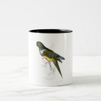Patagonian Parrakeet mug