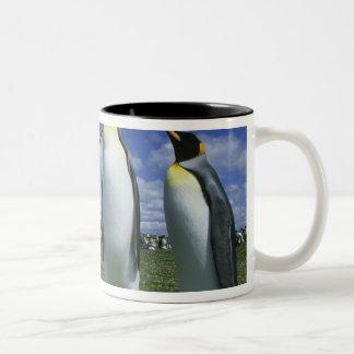 Patagonicus de rey pingüino, del Aptenodytes), Tazas De Café