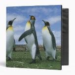 Patagonicus de rey pingüinos, del Aptenodytes),