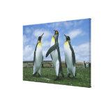Patagonicus de rey pingüinos, del Aptenodytes), Impresiones En Lona