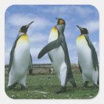 Patagonicus de rey pingüinos, del Aptenodytes), Pegatina Cuadrada