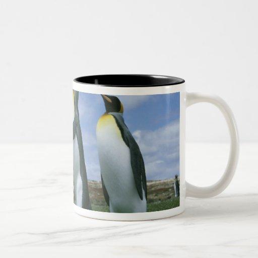 Patagonicus de rey pingüinos, del Aptenodytes), Tazas De Café