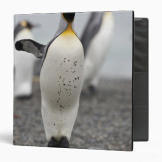 Patagonicus del Aptenodytes de rey pingüino) encen