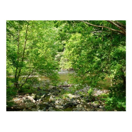 Patapsco River View Maryland Nature Photography Postcard