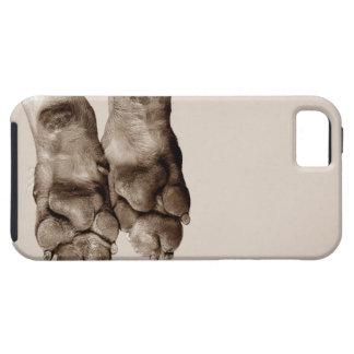 Patas de los perros iPhone 5 carcasas