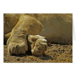 Patas del león tarjeta de felicitación