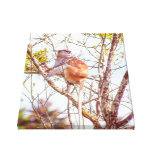 Patas is Up a Tree Canvas Print