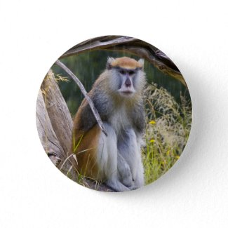 Patas Monkey Buttons
