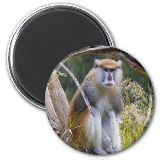 Patas Monkey Fridge Magnet