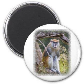 Patas Monkey Fridge Magnets
