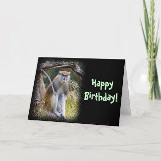 Patas Monkey Greeting Cards