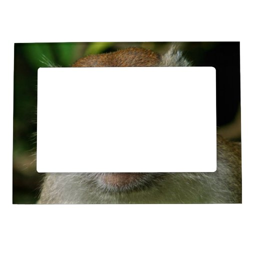 Patas Monkey Magnetic Frame