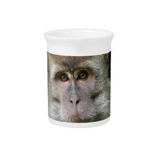 Patas Monkey Pitcher