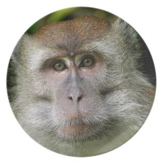 Patas Monkey Plate