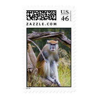 Patas Monkey Postage Stamp