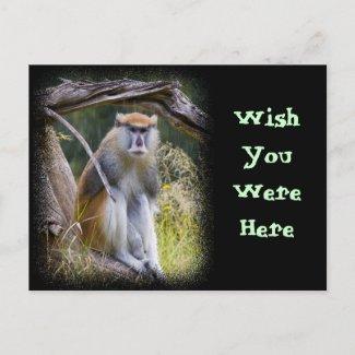 Patas Monkey Postcards