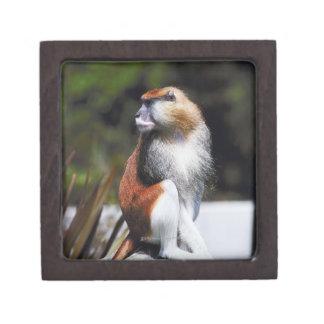Patas monkey premium keepsake box