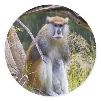 Patas Monkey Round Sticker