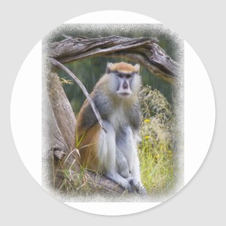 Patas Monkey Round Stickers