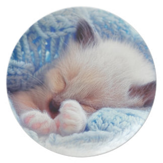 Patas siamesas del gatito el dormir platos