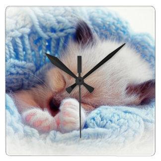 Patas siamesas del gatito el dormir reloj cuadrado