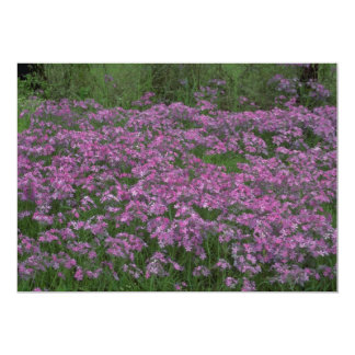 Patch of wild vorbenia in East Texas 5x7 Paper Invitation Card