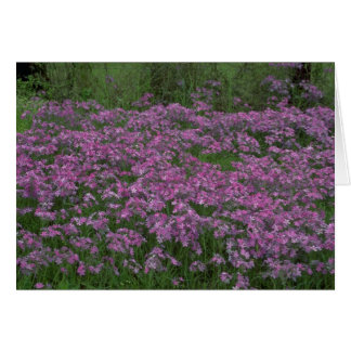 Patch of wild vorbenia in East Texas Greeting Card