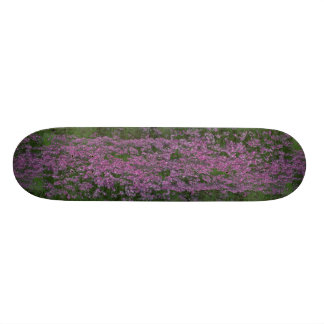 Patch of wild vorbenia in East Texas Skate Boards