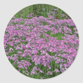Patch of wild vorbenia in East Texas Yellow flower Classic Round Sticker