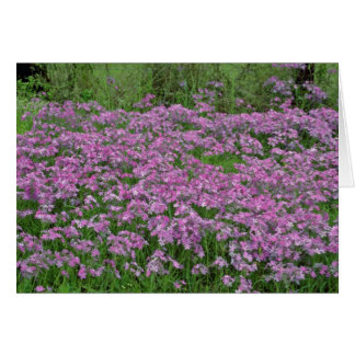 Patch of wild vorbenia in East Texas Yellow flower Greeting Card