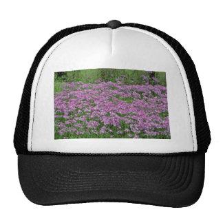 Patch of wild vorbenia in East Texas Yellow flower Trucker Hat