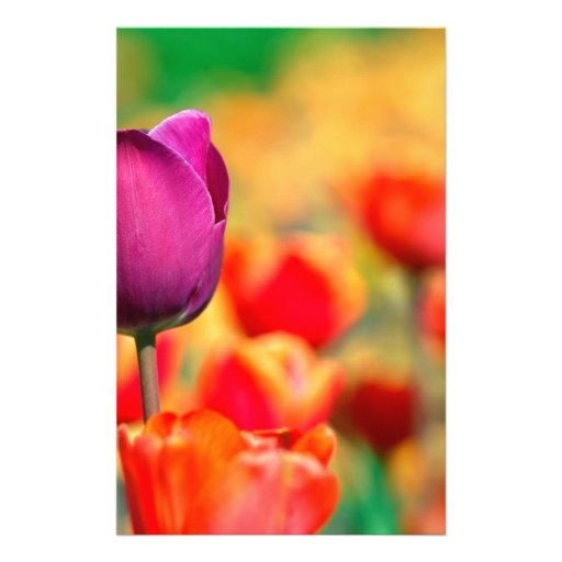 Patch with tulips stationery