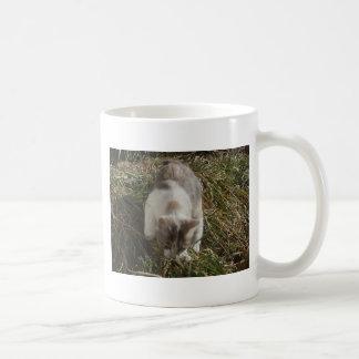 Patches Exploring Coffee Mug