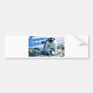 Paternidad del pingüino pegatina de parachoque