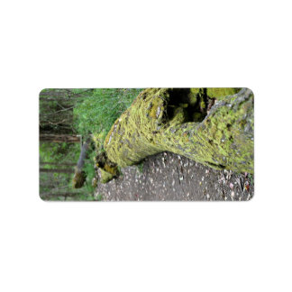 Path beside mossy log address label