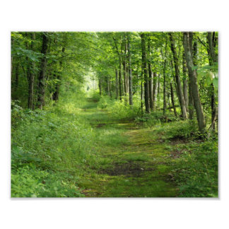 Path between the trees 10 x 8 Photographic Print