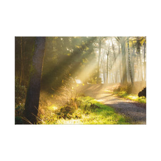 Path in forest with rays of sunlight canvas print