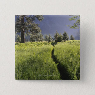 Path in meadow, Yosemite National Park Button
