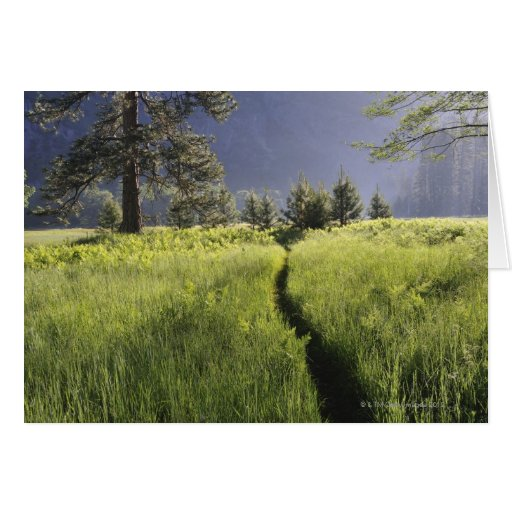 Path in meadow, Yosemite National Park Card