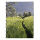 Path in meadow, Yosemite National Park Notebook