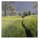 Path in meadow, Yosemite National Park Tile